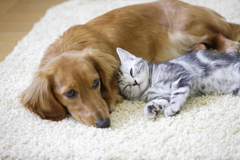 イヌやネコ、ハムスターなどのフケが原因となります。